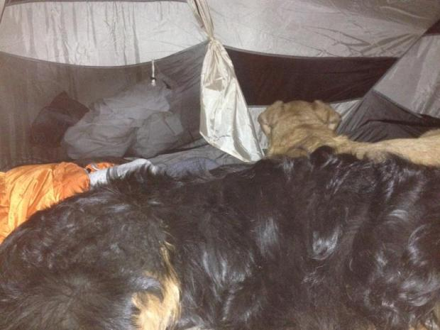 My dogs are the best. They made a fort to keep me warm. Tyke slept at my head and would occasionally press his soft lab ears against my head and Wally was a gigantic teddy bear who was my big spoon. Love those monsters.